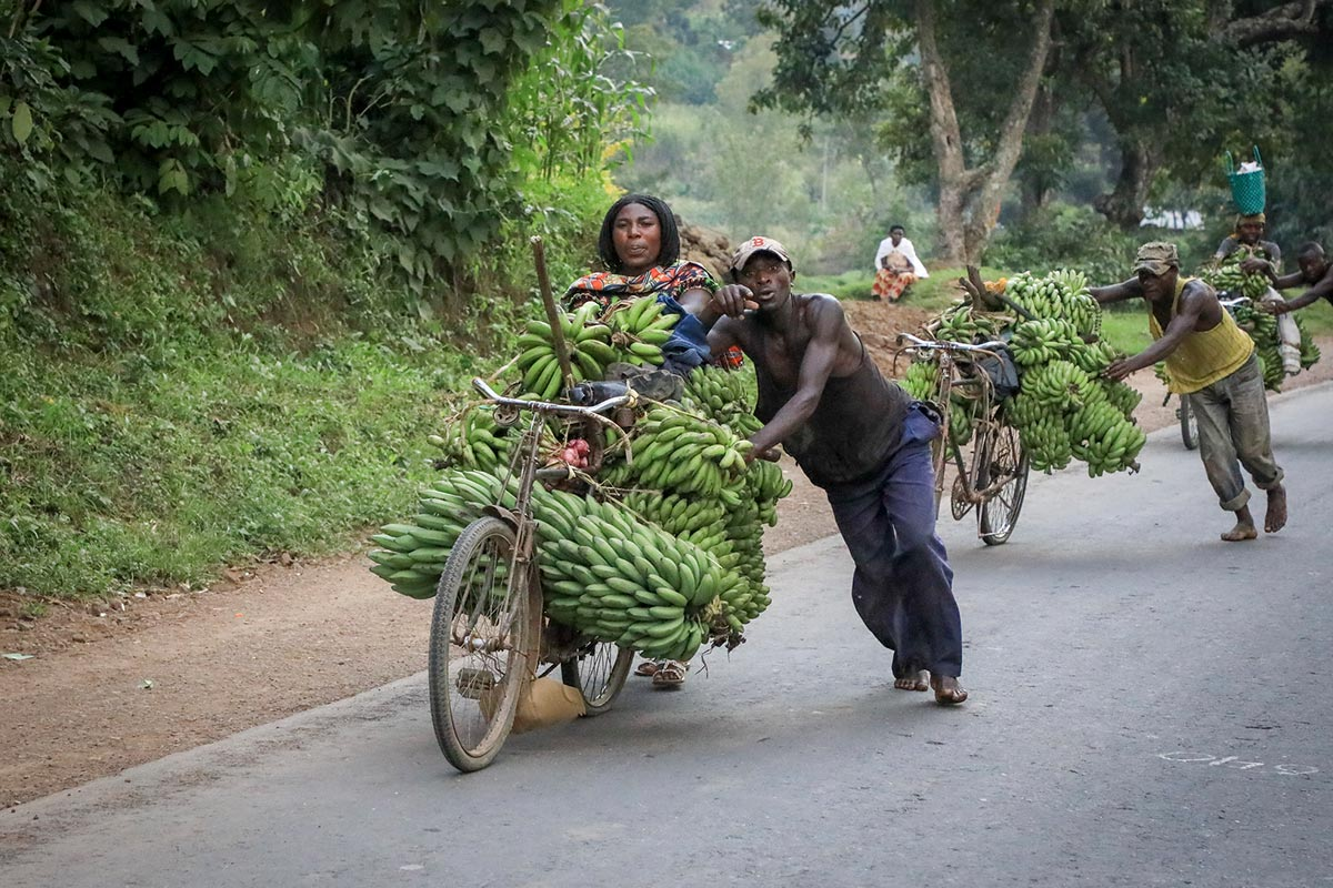 Man pushes matooke bananas on bike: Photography protocol in Uganda and anywhere else in Africa