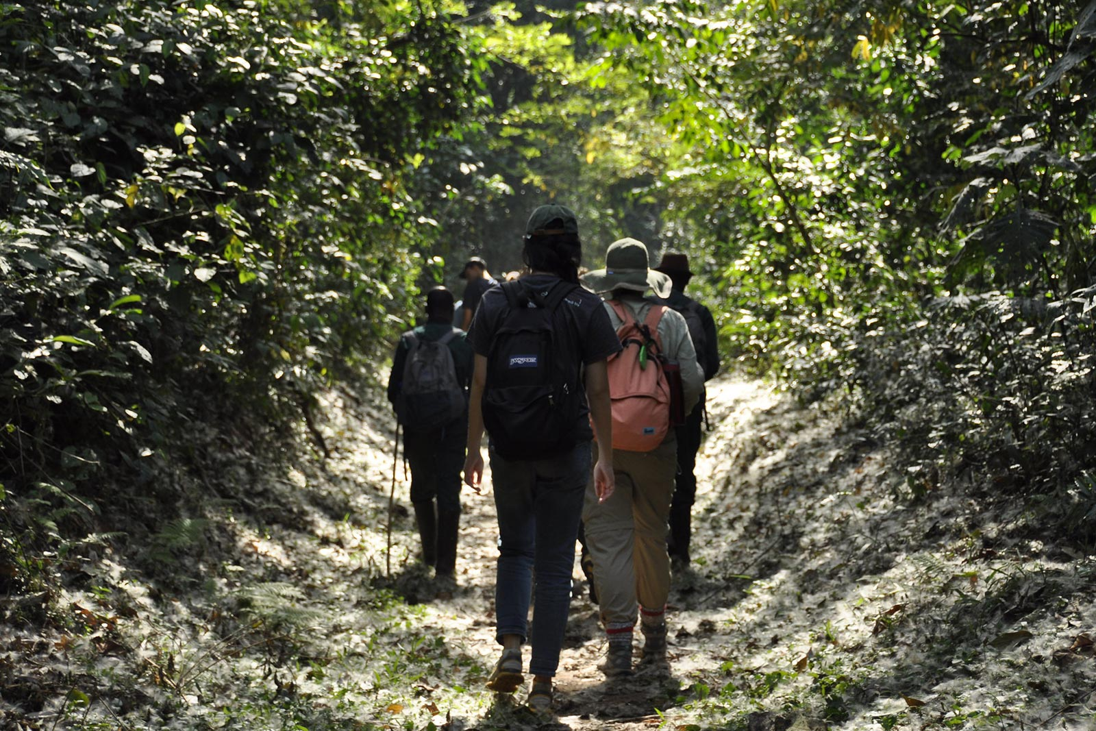 Day 4 — Chimpanzee trekking, Ishasha for tree climbing lions, then to Bwindi