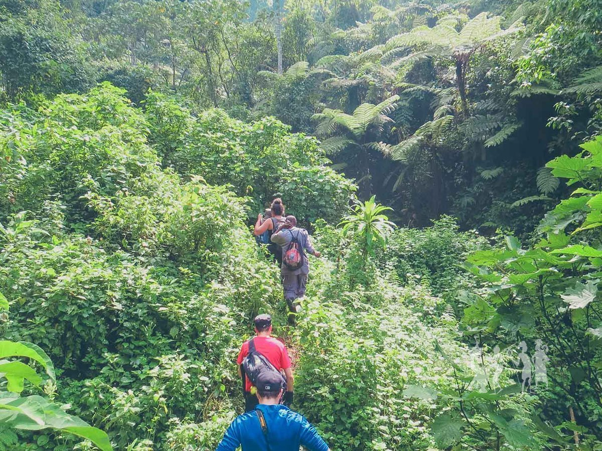 Day 3: Gorilla Tracking Adventure in Bwindi