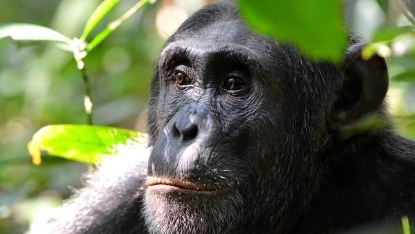 Kibale National park for chimpanzee trekking in uganda