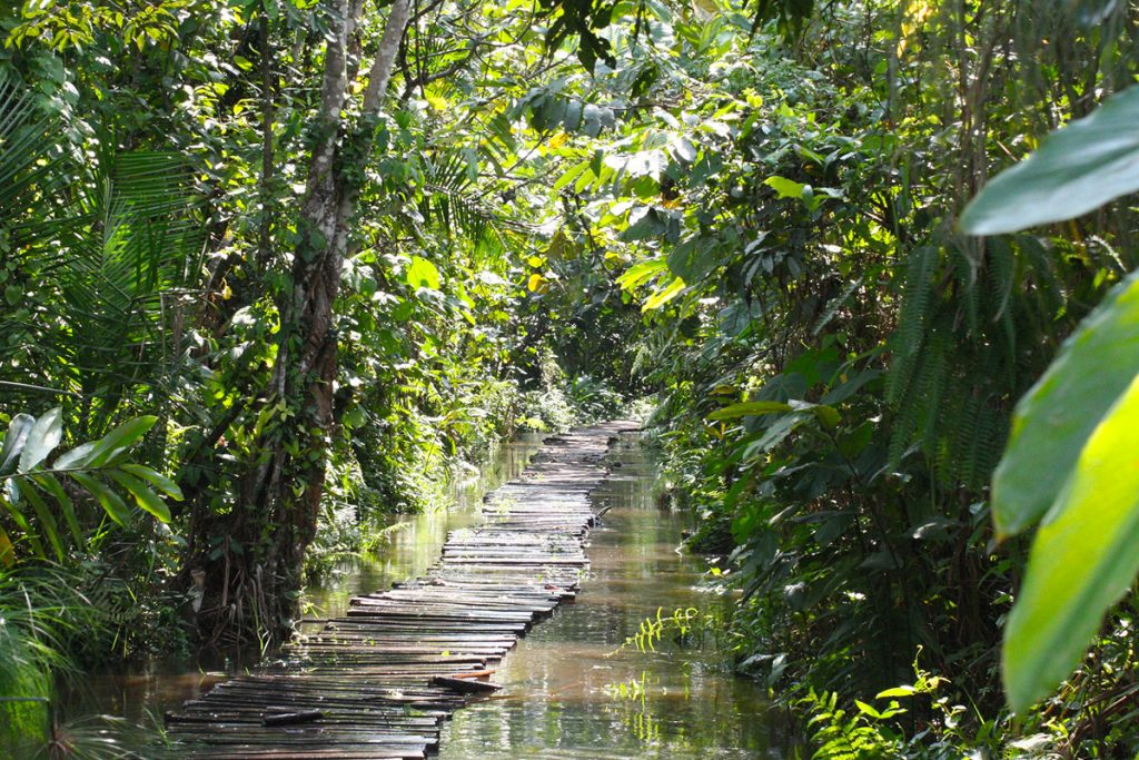 Bigodi wetland sanctuary