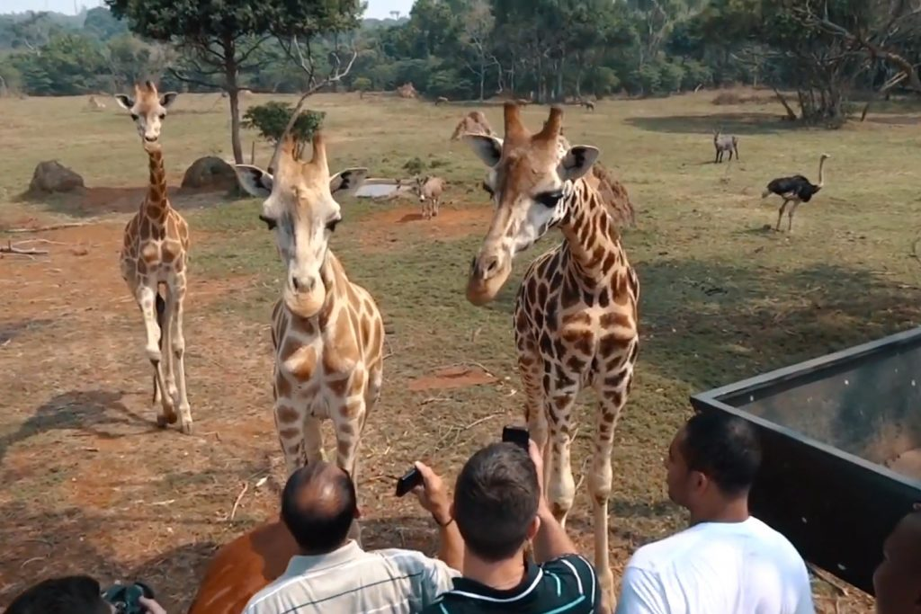 UWEC Zoo in Entebbe