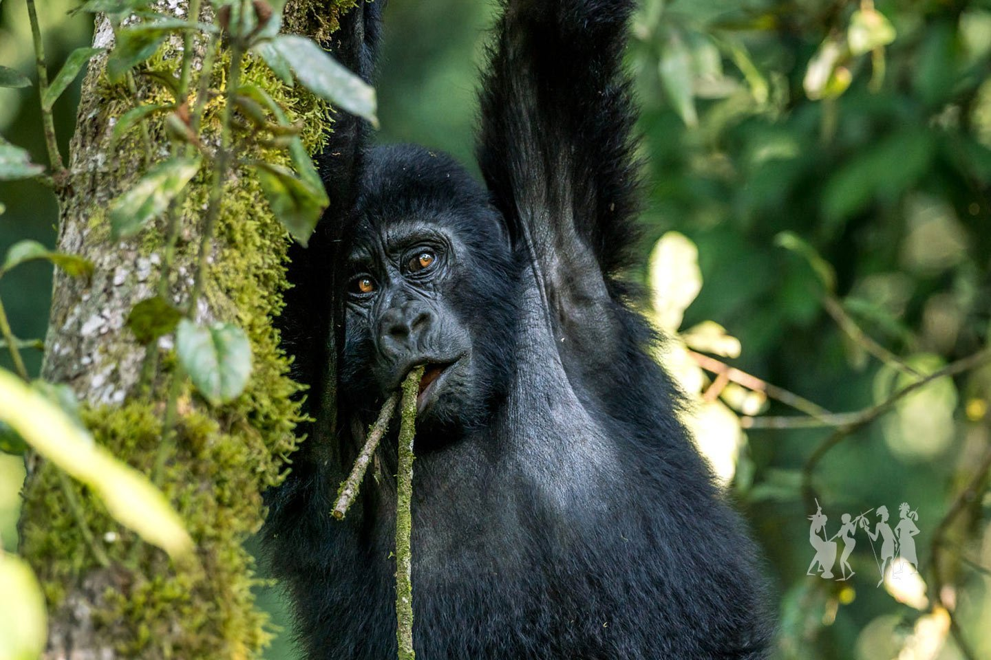 Day 4: Gorilla Tracking in Bwindi Impenetrable Forest
