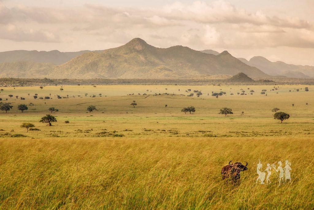 Game Viewing in Kidepo Valley National Park in noreastern Uganda. Remote wildlife reserve