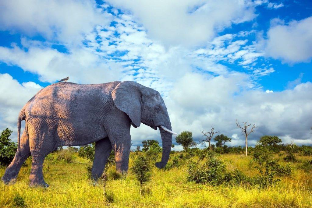 Places you should visit in Uganda