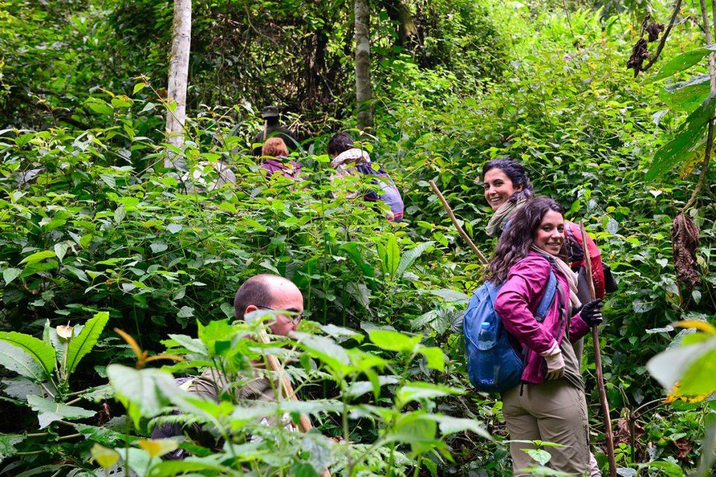 Gorilla Trekking in Bwindi Impenetrable NP