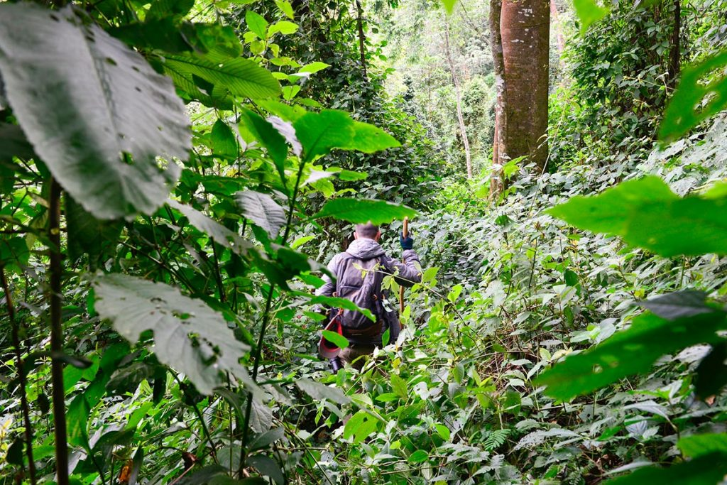 What to pack for gorilla trekking Uganda