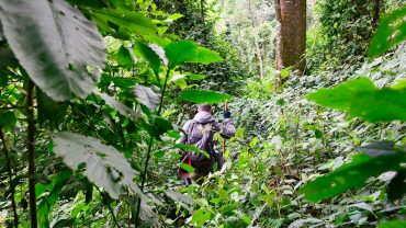 is the gorilla trekking experience worth it? Gorilla Safari in uganda, the Africa safari account.
