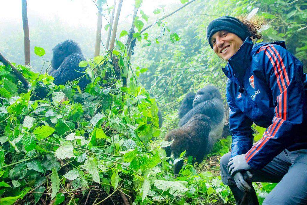 When to go see mountain gorillas in Uganda. best time to Visit Uganda