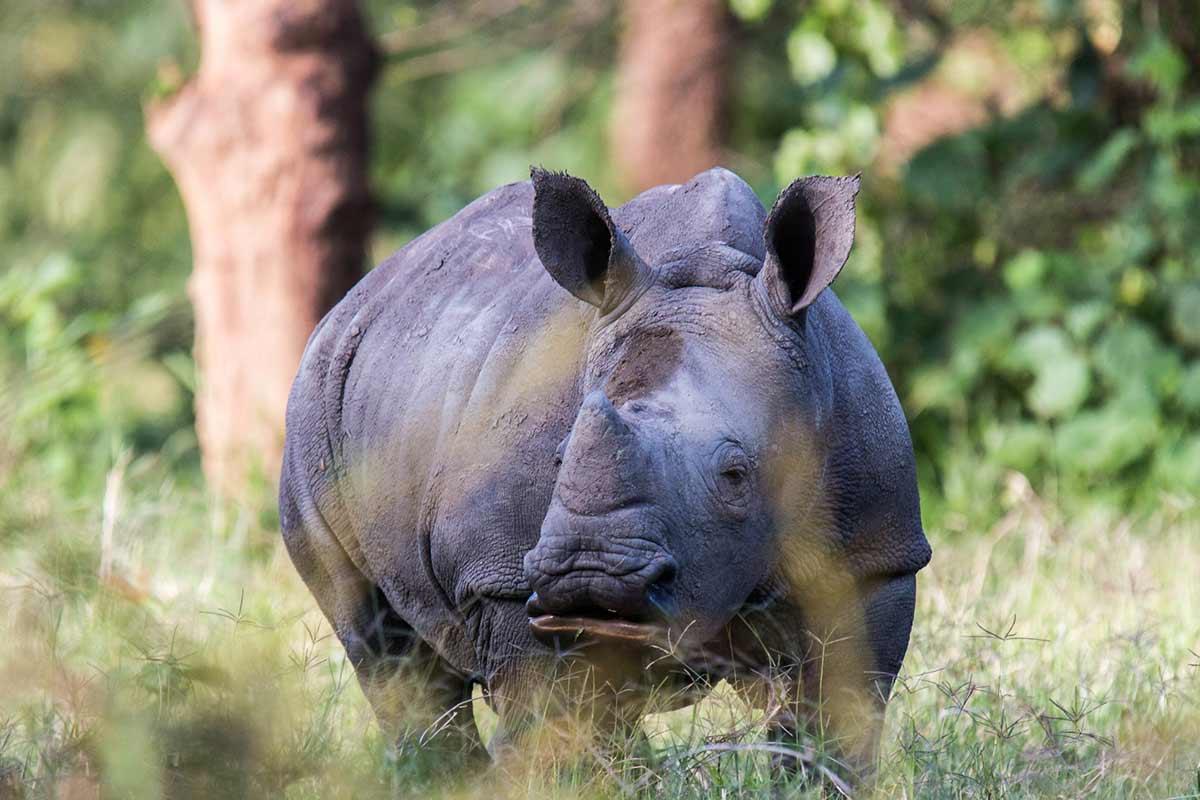 Baby White Rhino Ziwa Rhino Sanctuary
