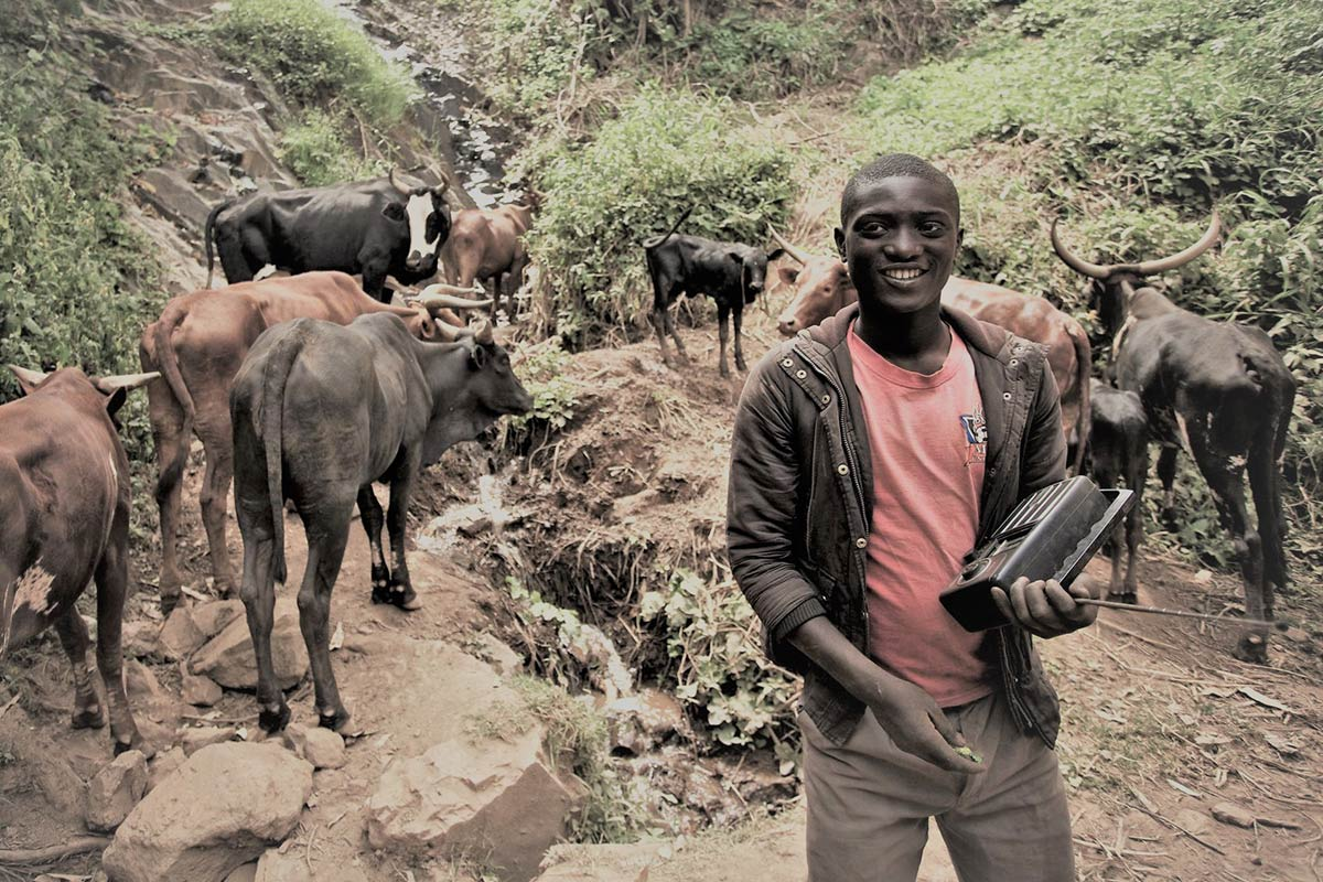 Uganda man listening to radio with cows in background: Media & Communication