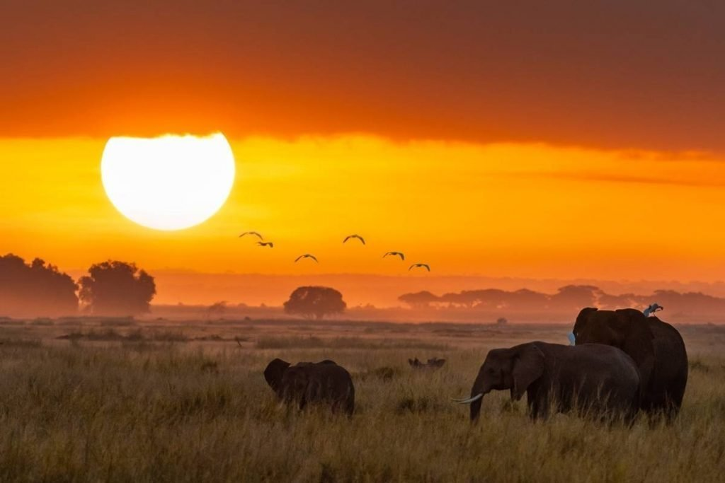 Sunrise on the savannah plains; mu uganda safari experience