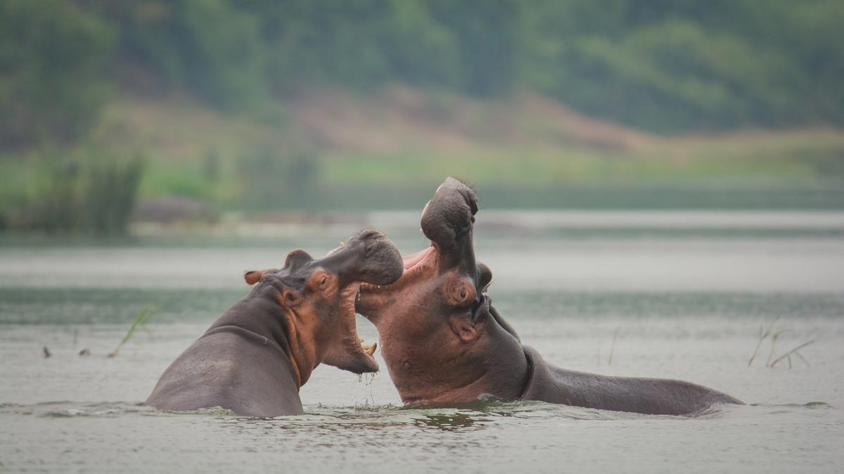 Kazinga Channel in Queen Elizabeth National Park, Top Destination in Uganda