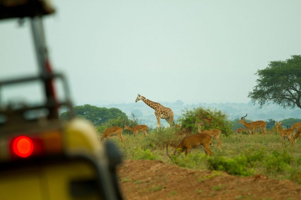 Early morning and late evening game drives reveal some of the best wildlife drama moments on the savannah plains.