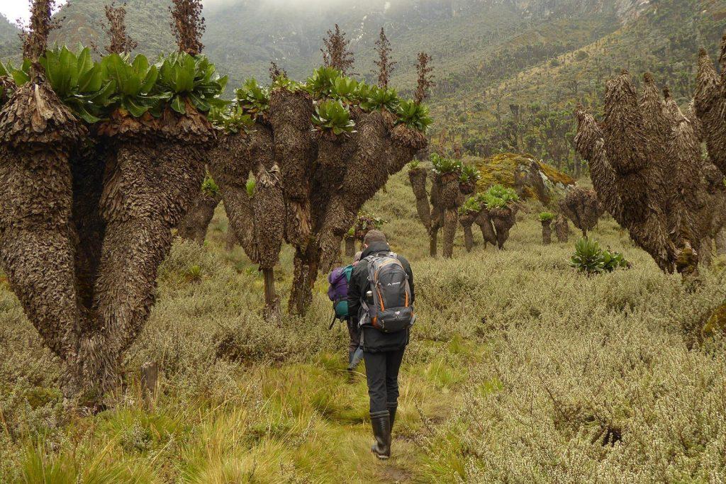 Rwenzori Central trail