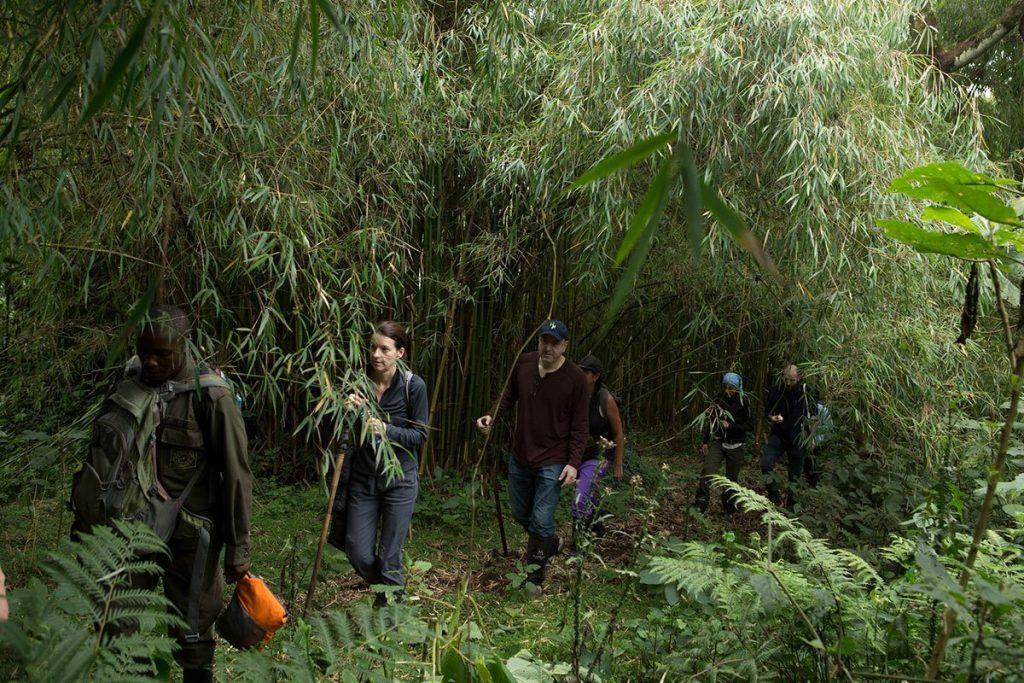 Trekking in bamboo groves in Mgahinga National Park, Uganda - The alternative primate safari in Uganda without gorillas
